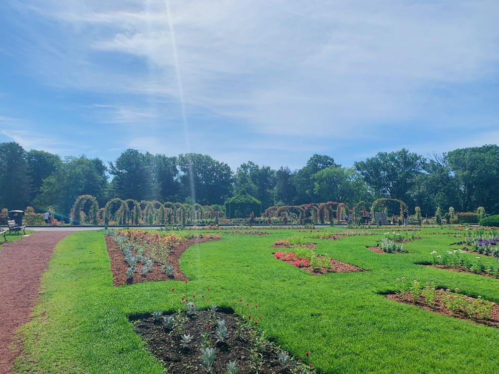elizabeth park rose garden